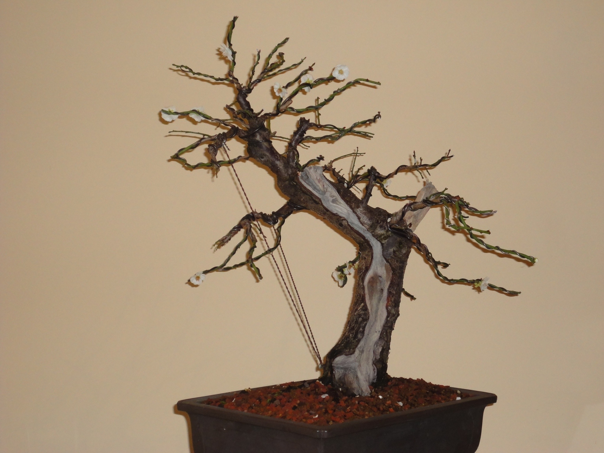 Prunus Mume Part 2 Of 4 Nebari Bonsai