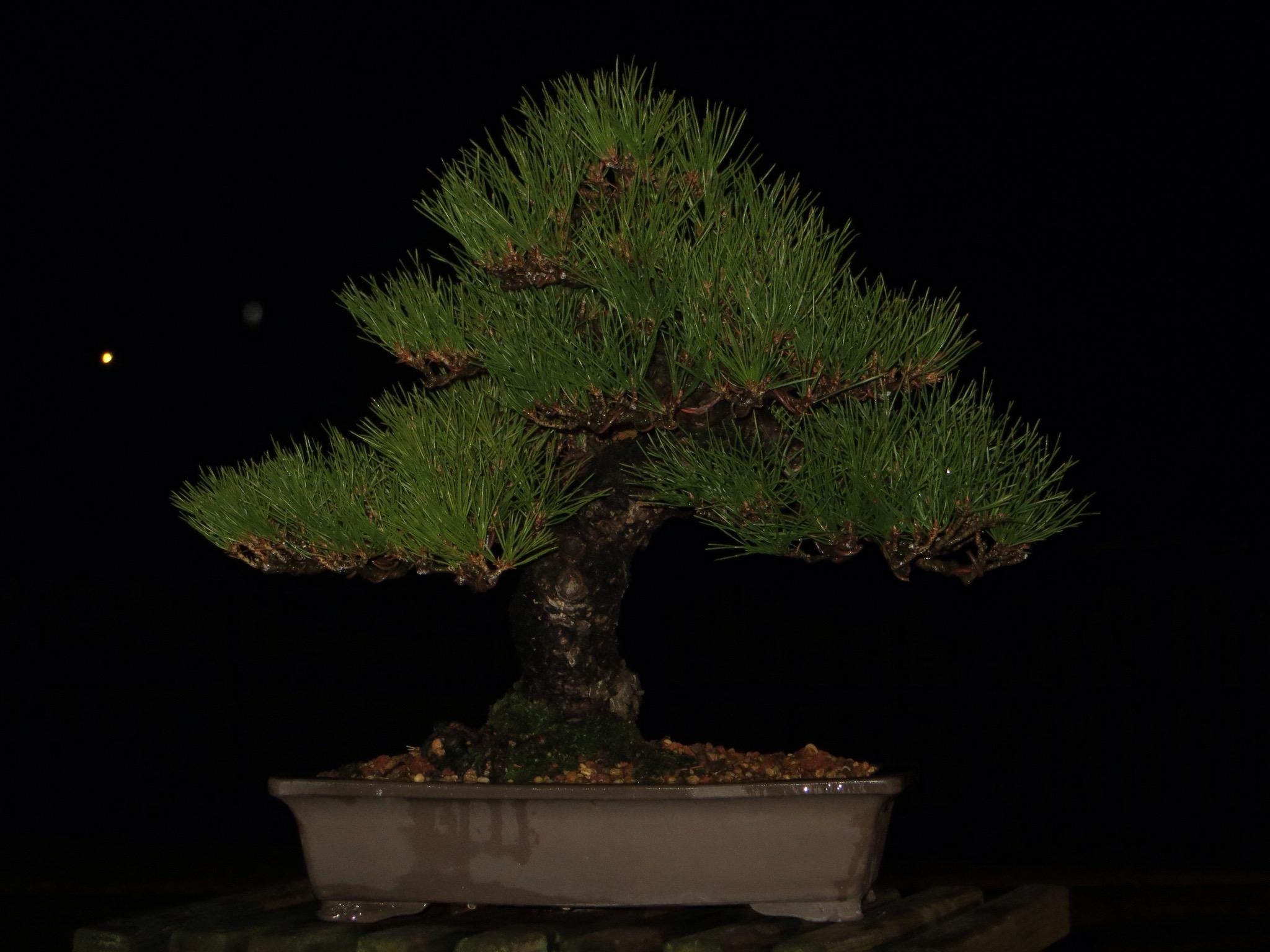 How I photograph bonsai
